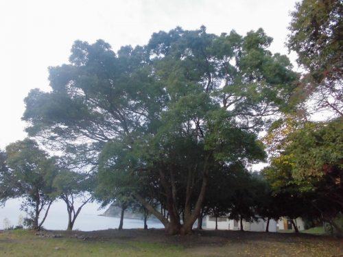大きな樹の下ポイント