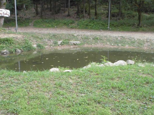 タロリン村の池