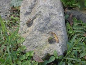 キャンプ場の石