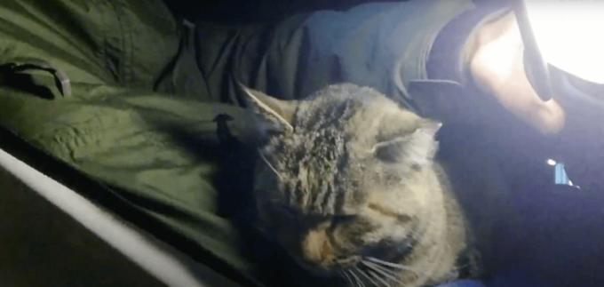 丸山県民サンビーチの猫